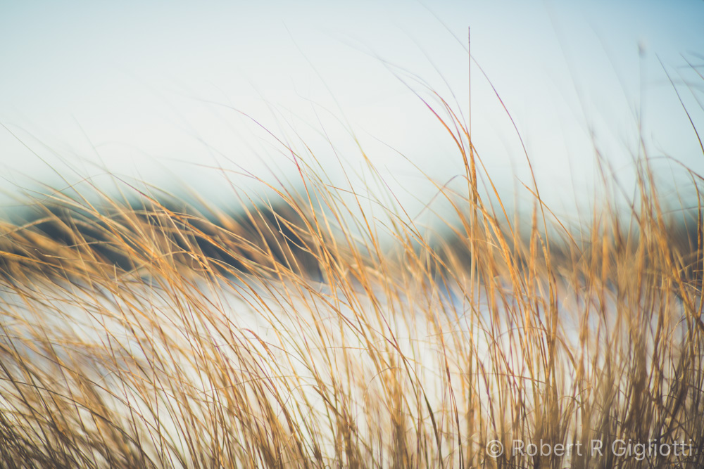 Grasses Photo by RRG Photography